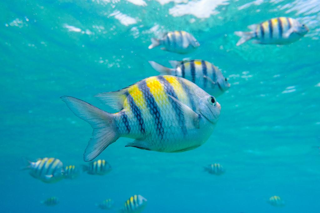 Scuba Diving the Yucatan Peninsula