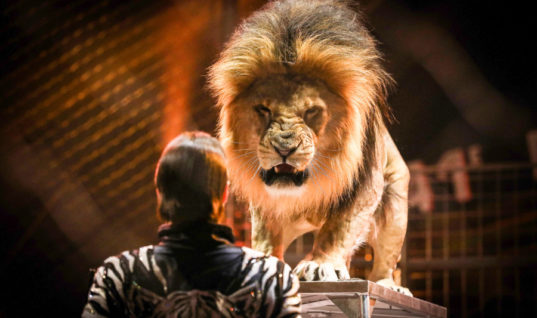 Scotland Bans the Use of Wild Animals in Circuses