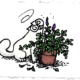 Simon's Cat Logic Explains the Reason Why Some Cats Are So Attracted to Catnip