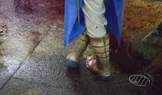 The Psychological Toll Of Working In A Slaughterhouse