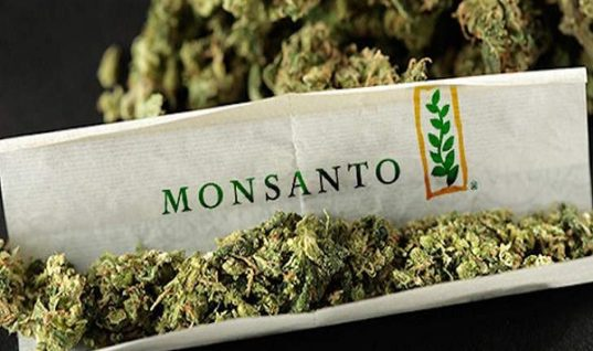 Monsanto And Bayer Are Maneuvering to Take Over the Cannabis Industry
