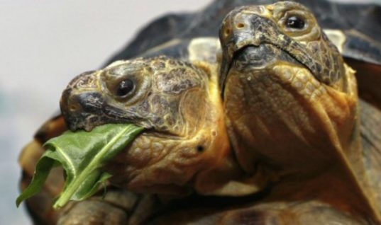 11 Animals Born With Two Heads