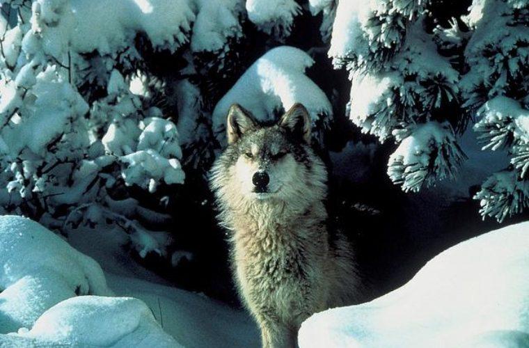 Wildlife Services Killed 1.3 Million Native Animals In 2017