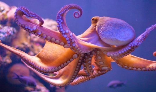 "33 Scientists Publish Paper Suggesting Octopuses Arrived As ""Extraterrestrial Imports"" To Earth"