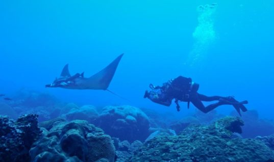 First Manta Ray Nursery Ever Discovered Shows Marine Protected Areas Matter