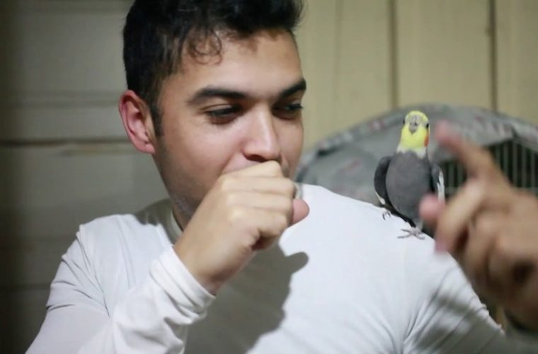 A Tiny Cockatiel Happily Beatboxes In Rhythm With Her Beloved Human While Sitting on His Shoulder