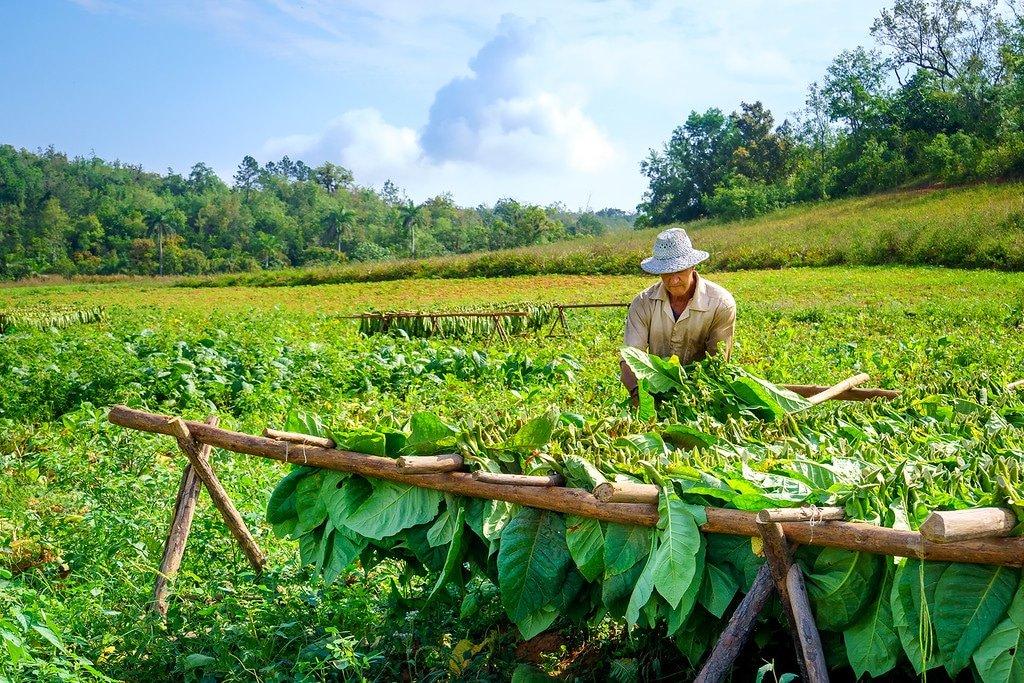 Vinales Tobacco Farm