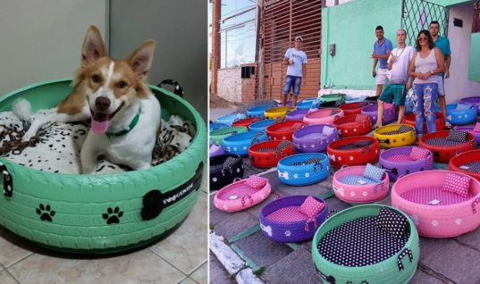 Brazilian Artist Upcycles Tires & Turns Them Into Beds For Animals!