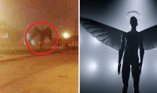 Documentary to Investigate Mothman Creature