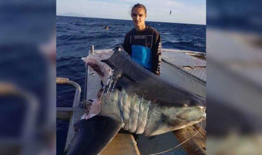 Australian Fisherman Stumped By What Decapitated This Mako Shark