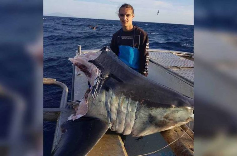 Australian Fisherman Stumped By What Decapitated This Mako Shark