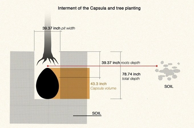 The end of the coffins? - Ecological burials turn bodies into seeds for trees 34