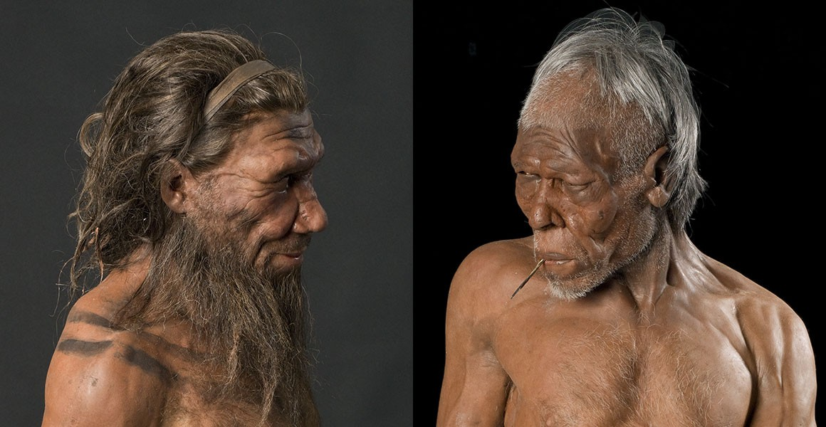 Traces of Neanderthal DNA found in African genome 31