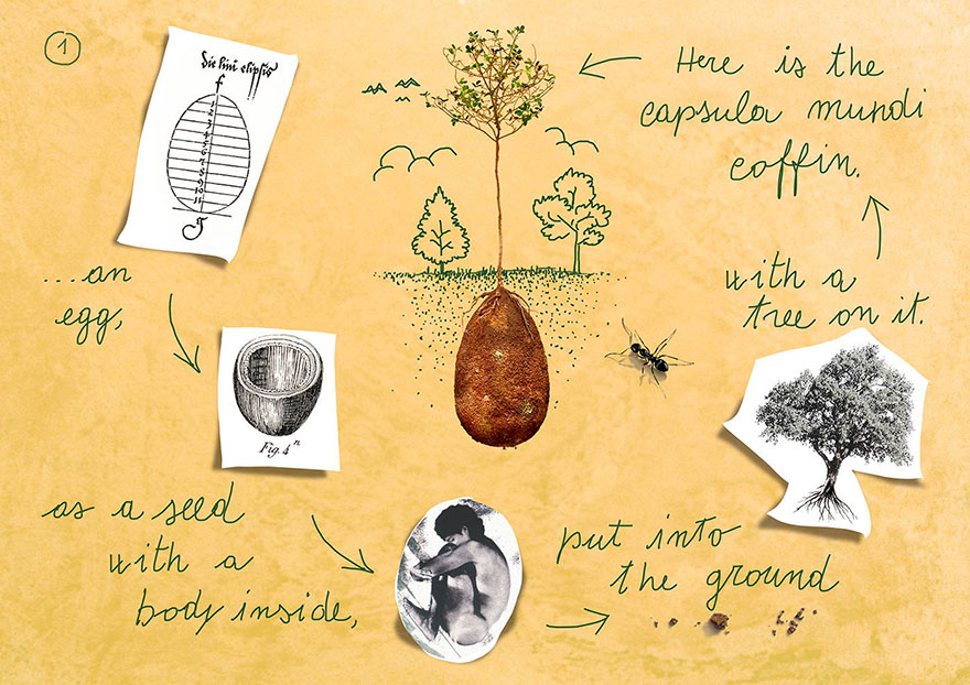 The end of the coffins? - Ecological burials turn bodies into seeds for trees 32