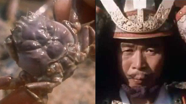 Heike, the mystery of the samurai-faced crabs 32