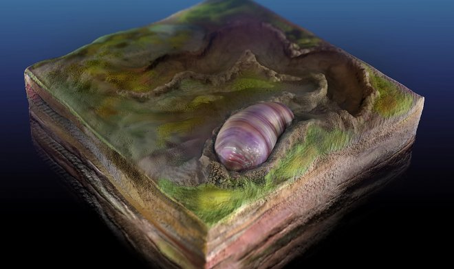 The fossilized remains of the oldest ancestor of all animals on Earth are found In Australia 31