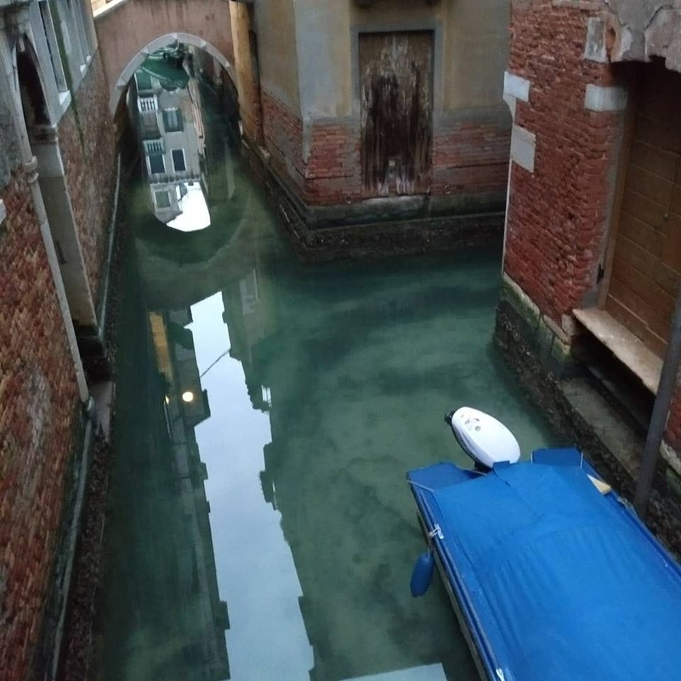 Swans and hundreds of fish return to the canals of Venice after the quarantine in Italy