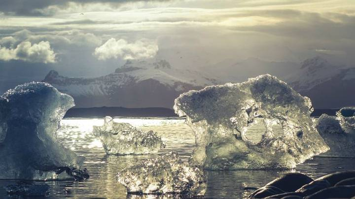Scientists unearth evidence of ancient jungle in Antarctica 34