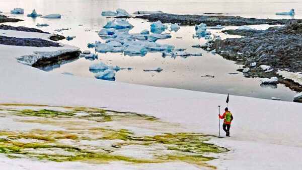 Green snow phenomenon in Antarctica worries scientists 11