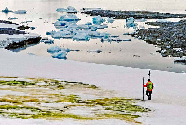 Green snow phenomenon in Antarctica worries scientists 33