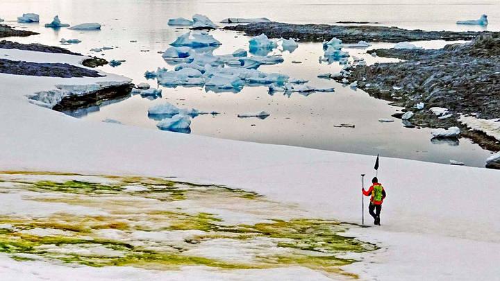 Green snow phenomenon in Antarctica worries scientists 31