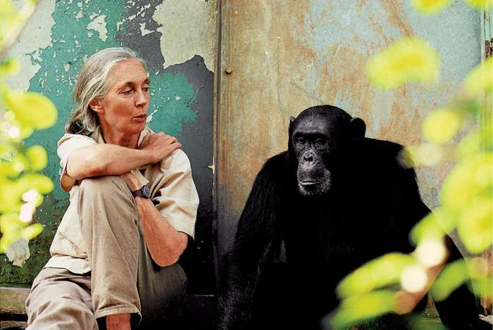 Jane Goodall: humanity is doomed if we don't change after the pandemic