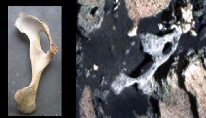 """Specialist says that the rover curiosity has found """"fossils"""" on Mars 40"""
