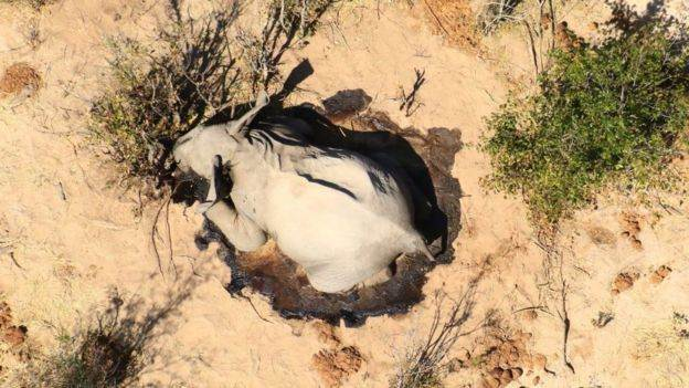 Hundreds of elephants mysteriously die in Botswana 33