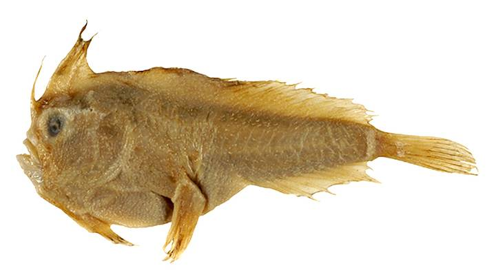 Scientists confirm the first extinction of a marine fish in modern times 33