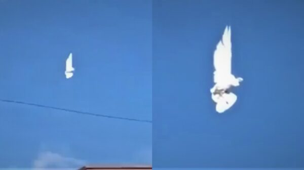 "A bird ""suspended in the air"" goes viral on the networks 30"