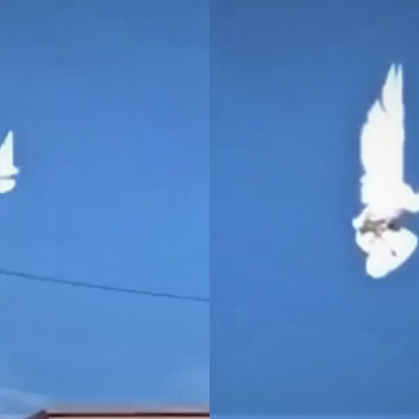 "A bird ""suspended in the air"" goes viral on the networks 37"