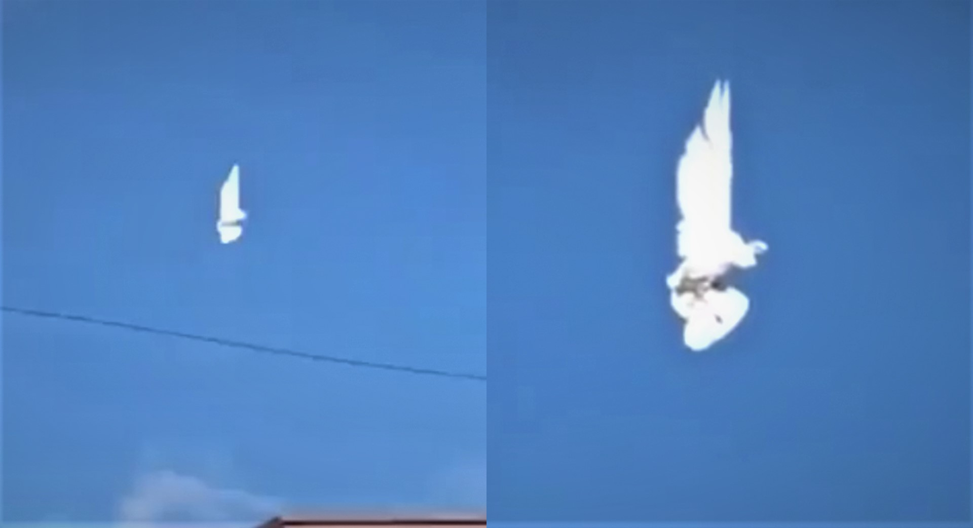 "A bird ""suspended in the air"" goes viral on the networks 31"