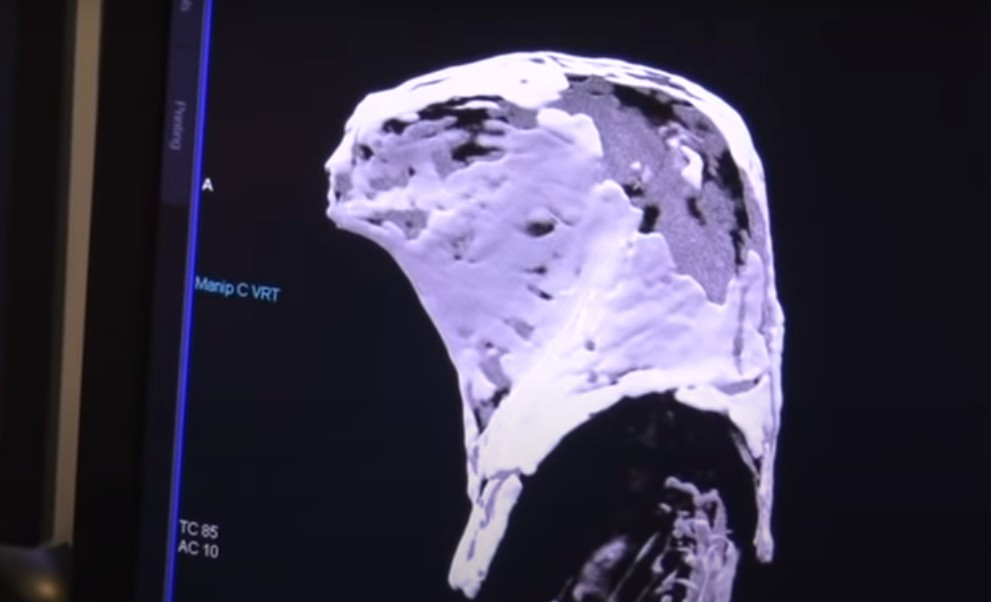 The CT scans performed on Mummies in Egyptian sarcophagi reveal that they are not Human 46