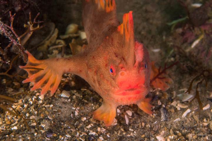 Scientists confirm the first extinction of a marine fish in modern times 31