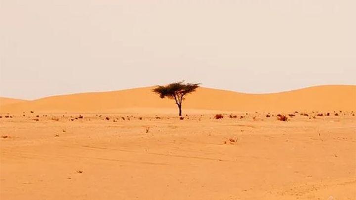 1.8 billion trees discovered in the Sahara desert 37