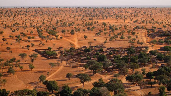 1.8 billion trees discovered in the Sahara desert 12
