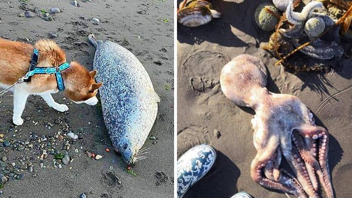 a mysterious toxic stain causes massive death of marine animals 31