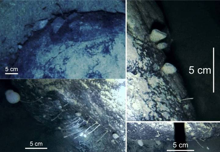 Mysterious Life forms Discovered under the Antarctic ice 31
